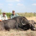 Buffalo hunt 2013