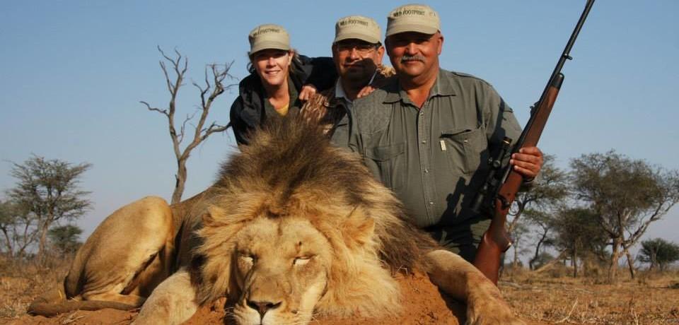 Lion, Crocodile and Buffalo hunt
